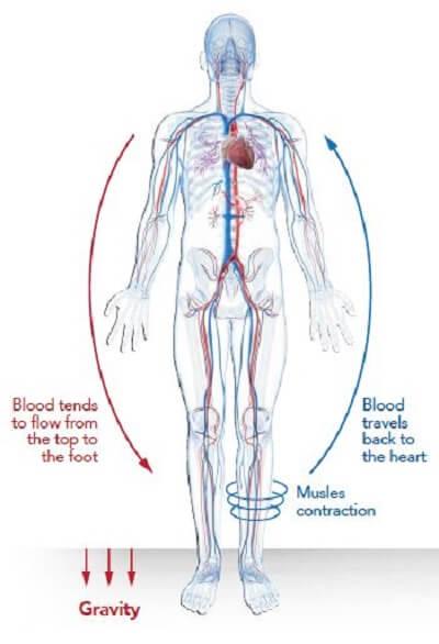 blood circulation in human body
